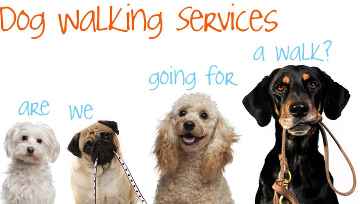 Paws and Claws Dog Walking and Pet Sitting Services